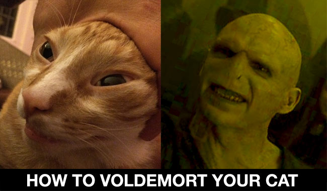 How To Voldemort Your Cat